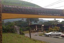 Photo of پارک ملی گونونگ گادینگ مالزی