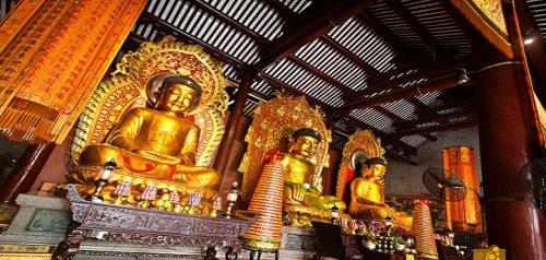 معبد 6 درخت انجیر چین