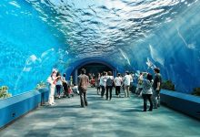تصویر آکواریوم پاتایا: دنیای زیر آب پاتایا