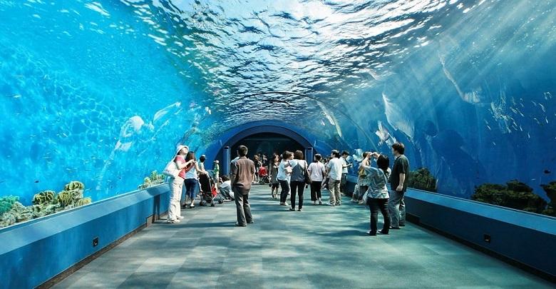 آکواریوم پاتایا، دنیای زیر آب