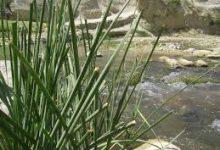 تصویر چشمه آب گرم ارناوه