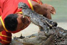 تصویر پارک کروکدیل ها در تایلند