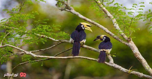 عکس پارک ملی کائو یای تایلند