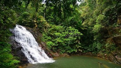 Photo of آبشار کوتا تینگی مالزی