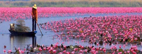 دریاچه لوتوس قرمز در تایلند